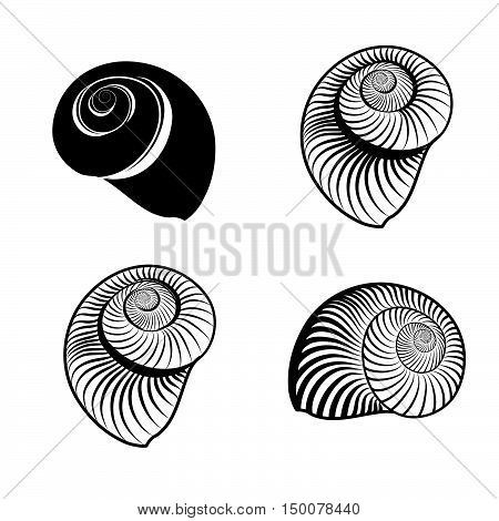 Seashell collection. Sea shell set ingraved vector illustration solated on white background.