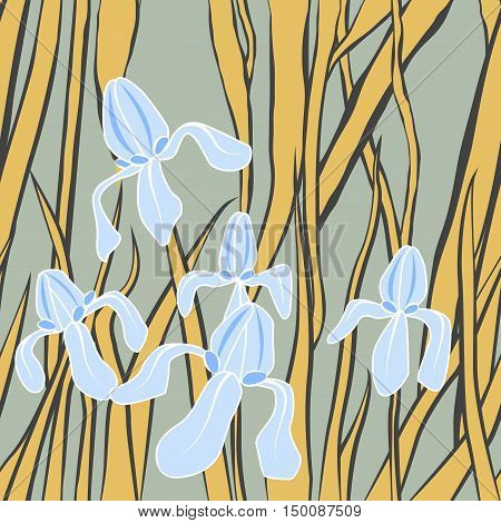 Vector. Graphic stylized image of irises.. Vector illustration with iris. Endless stylish texture. Template for design textile, backgrounds, wrappers, package