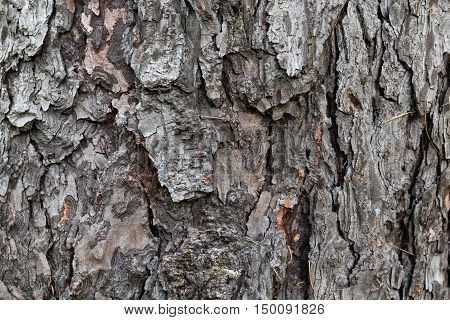 Bark. bark backgrounds. bark of tree texture in the park. Vertical composition of detailed tree bark background. nature of bark. detail of bark.