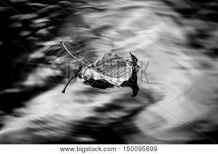 B&W fine art of leaf in water. A B&W image of a leaf floating in calm water.