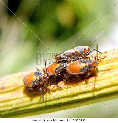 The garden bugs in Or Yehuda Israel December25 2010