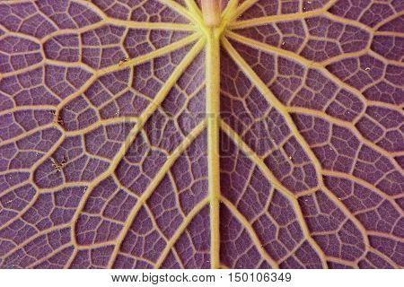 close up of leaf textures nature for background