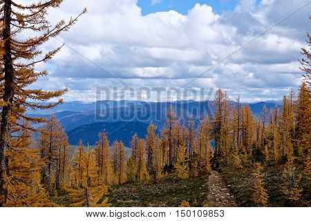 Path through yellow trees to mountains. Frosty Mountain. Manning Provincial Park. Hope. British Columbia. Canada.