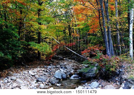 brook and colorful autumn forest in white mountain