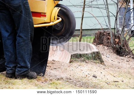worker operating machine to do stump grinding