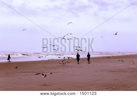 Boys And Birds 2