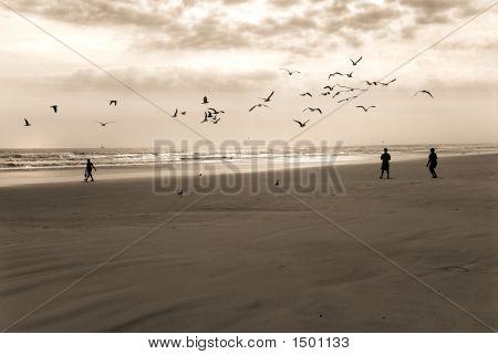Boys And Birds