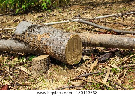 close up of wood logs in fores