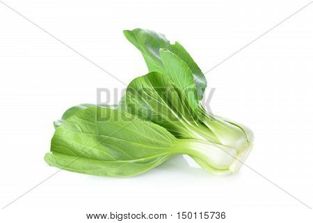 Chinese cabbage or bok choy on white background