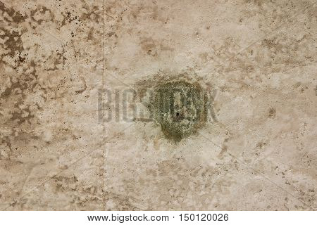 concrete wall with grunge texture and moss green algae texture background