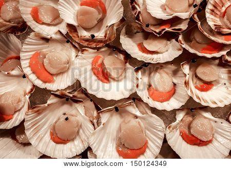 Scallops for sale at the Rialto fish market