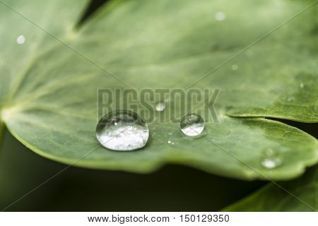 rain drops on a green leaf macro closeup