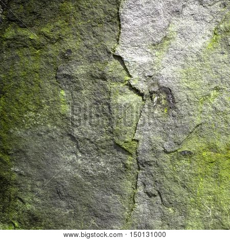 Side view of alien skull in rock background (abstract symbol idea).