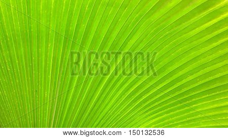 Close up of large green palm leaf