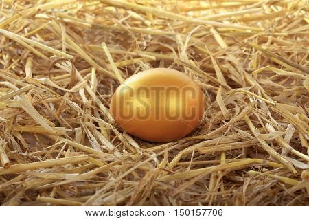 the a gold egg of hen on straw