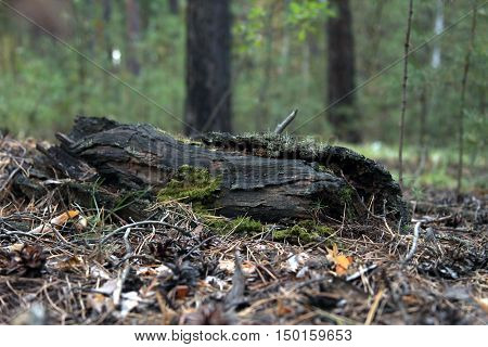 Moldering log with moss and overgrown with plants. Magical forest