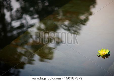 Lonely paper lily lantern floating in pond