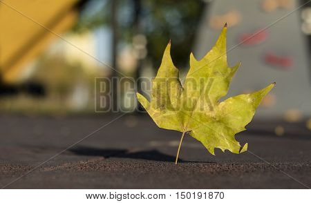 Single autumn leaf  on the ground with blurry background