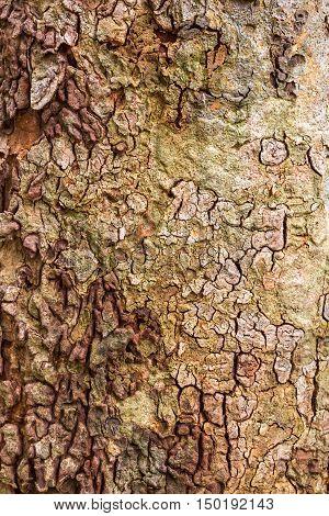 Background of tree bark texture. Brown bark.