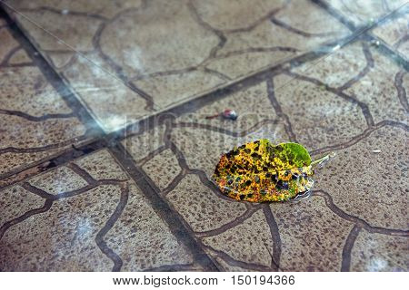 Yellow leaf in a puddle of water