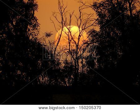 Sunset hiding behind some trees and is almost part of the environment