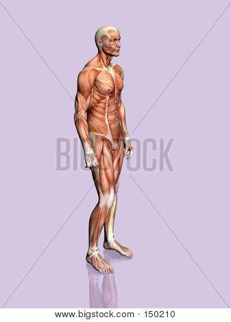 Anatomie des Menschen.