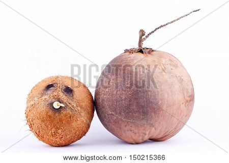 brown coconut shell and fresh ripe coconut for coconut milk  on white background healthy fruit food isolated
