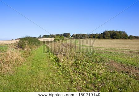 Woodland Copse In Autumn