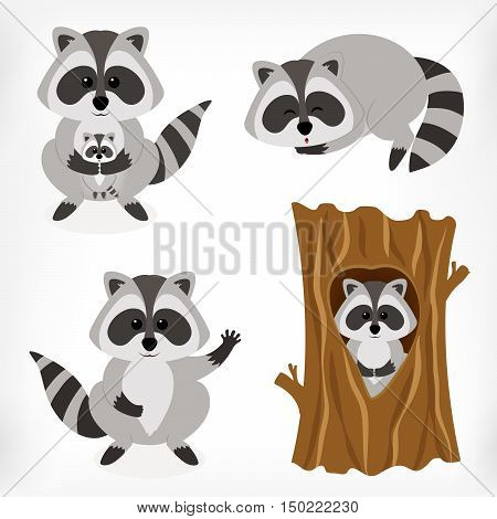 Raccoon set with standing raccoon raccoon with baby sleeping raccoon and raccoon inside tree. Vector cartoon illustration.