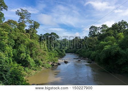 Segama river flanked by the undisturbed lowland dipterocarp forest in Danum Valley Conservation Area Sabah Borneo Malaysia. Danum Valley one of the last undisturbed tropical rain forest in the world
