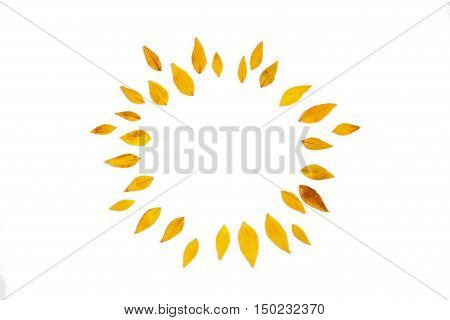 Yellow leaves arranged in round shape on white background. Flat lay top view. Autumn leaves of Platycodon grandiflorus