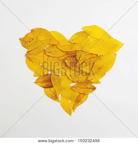 Yellow leaves arranged in heart shape on white background. Flat lay top view. Autumn composition of Platycodon grandiflorus