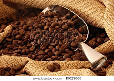 coffee beans spilling out of stainless steel scoop