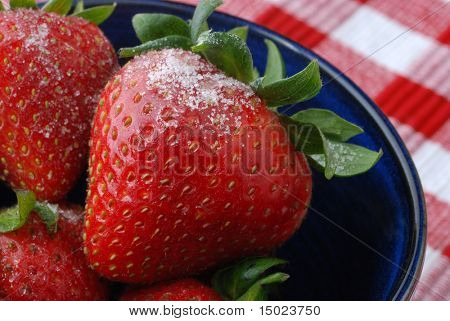 Macro still life of strawberries sprinkled with sugar in a small blue ceramic bowl.  Red and white checked tablecloth as background.  Shallow dof