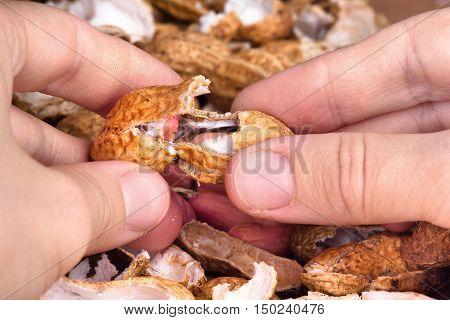 hands of woman peeling raw peanuts closeup