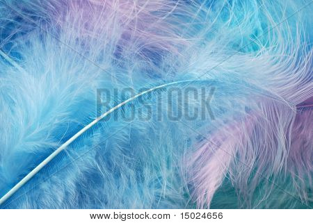 Soft, pastel colored feathers.  Ideal as background.