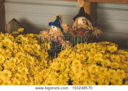 yellow mums with little scarecrows, muted colors