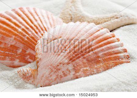Conchas y estrellas de mar sobre la arena blanca.  Macro con poca profundidad dof