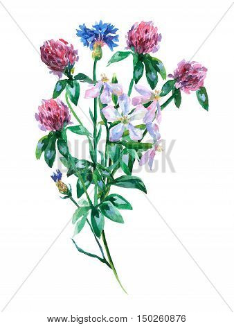 Blue cornflower, saponaria and pink clover shamrock bouquet. Watercolor hand painting illustration on isolate white background.