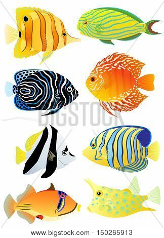 Collection of colorful tropical fish isolated on white background. Vector illustration.