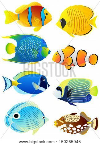 Collection of colorful tropical fish isolated on white background.