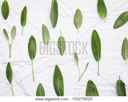 Closeup  Fresh Sage Leaves On White Wooden Background . Alternative Medicine Fresh Salvia Officinali