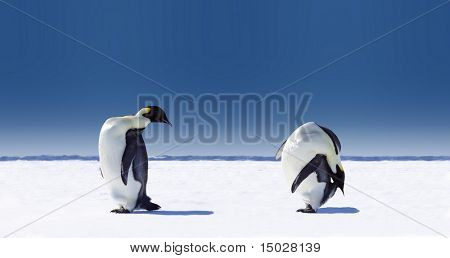 Penguins doing sports