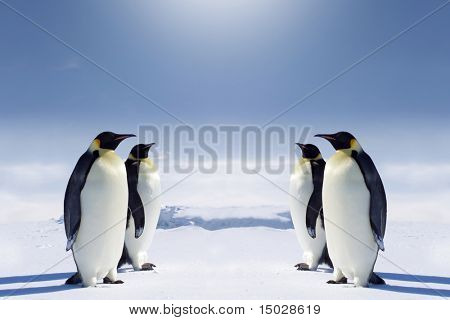 Two pairs of penguins facing each other at the South pole.