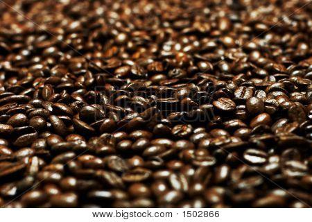 Cofee Grains (Shallow Dof)
