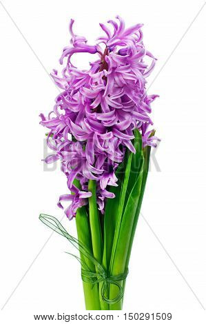 Colorful bouquet from hyacinth flowers arrangement centerpiece isolated on white background.