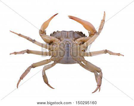 Closeup crab on white background. food. crab