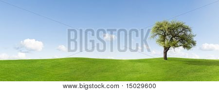 Panorama of apple tree on a meadow
