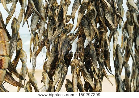 Dried fish of different species hanging on a thread.