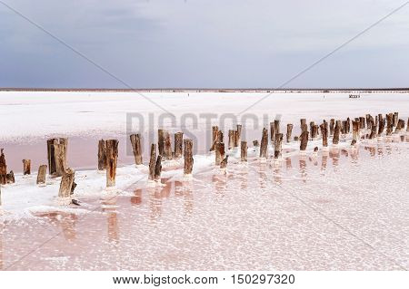 Salt Lake with pink water. The remains of wooden piles protrude from the bottom.